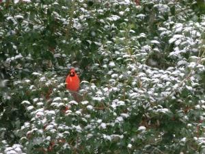 leonard-cardinal