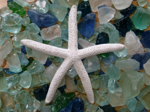 leonard-starfish
